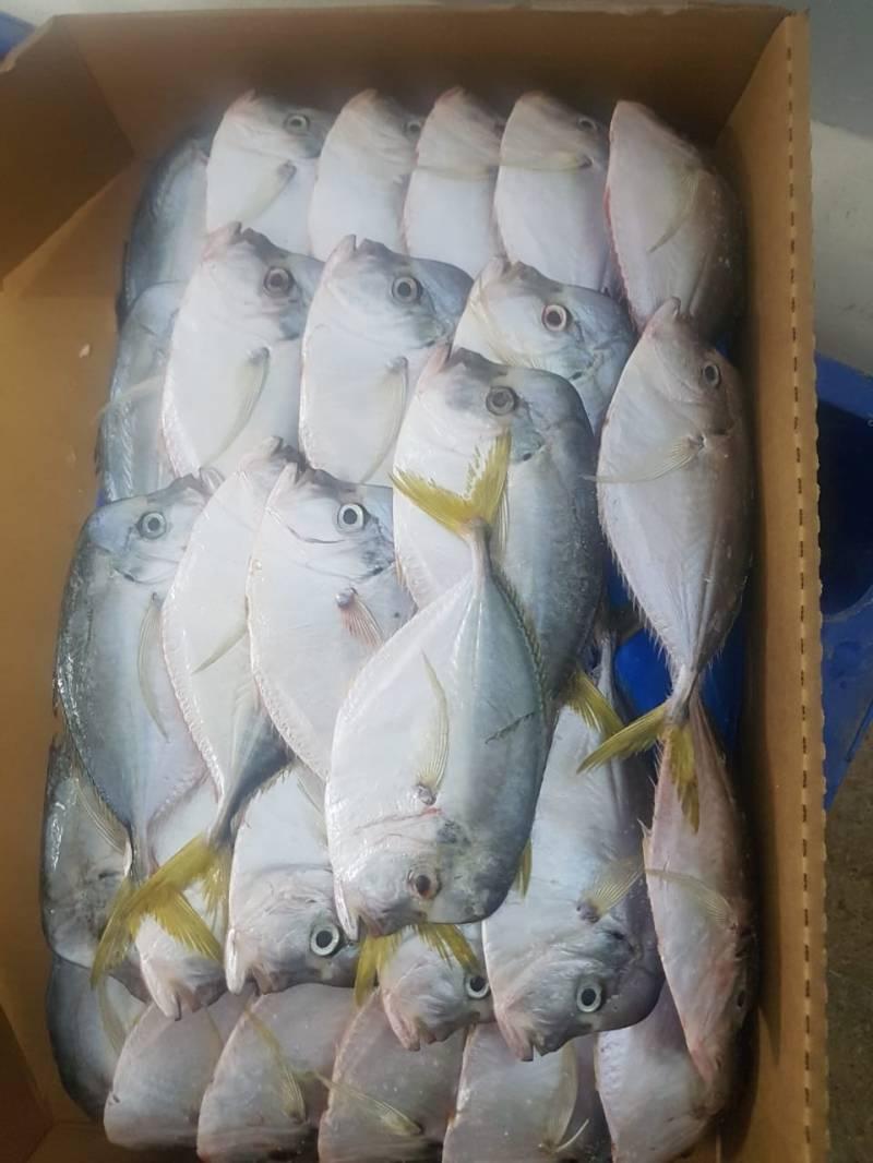 pescado en bloques de 10 kilos gramos